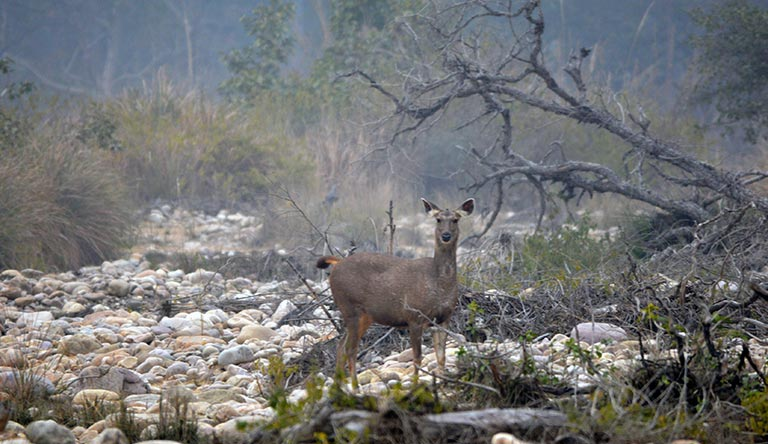 corbett-national-park-uttarakhand-india