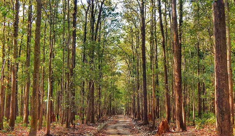 jim-corbett-park-uttarakhand-india