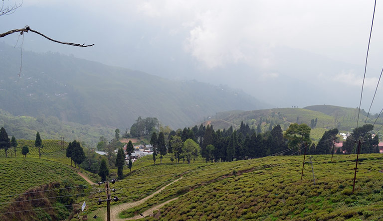 happy-valley-tea-estate-darjeeling-india.jpg