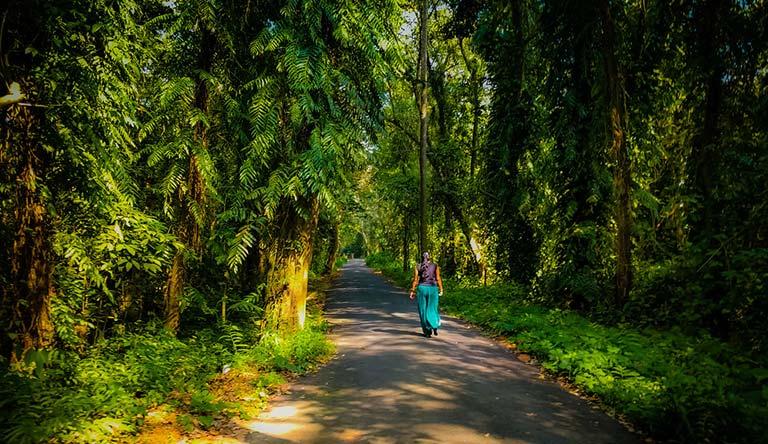 kumarakom-bird-sanctuary-kerala-india