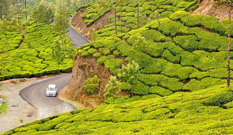plush-slopes-of-tea-hills-munnar-kerala-india.jpg