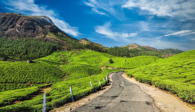 scenic-road-in-green-tea-plant-munnar-kerala-india.jpg