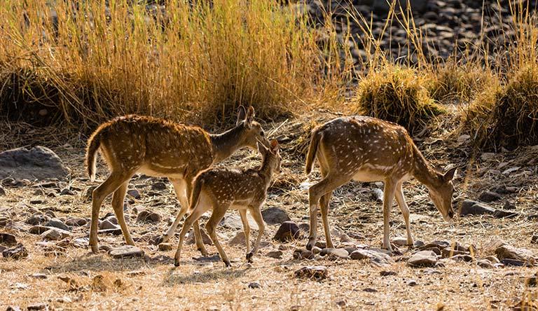 ranthambore-natue-reserve-rajasthan-india