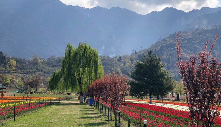 indira-gandhi-memorial-tulip-garden-srinagar-kashmir-india.jpg