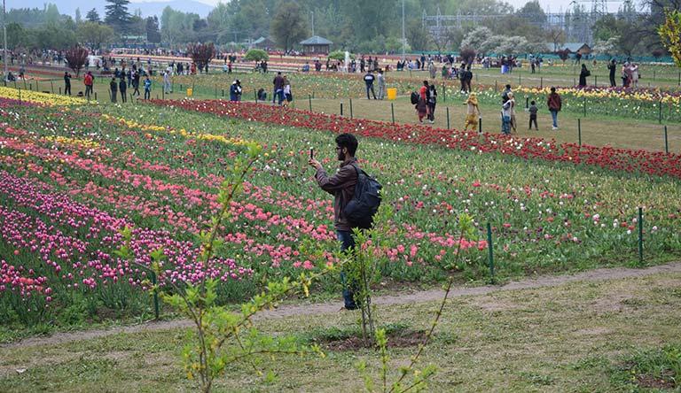 tulip-garden-srinagar-kashmir-india.jpg
