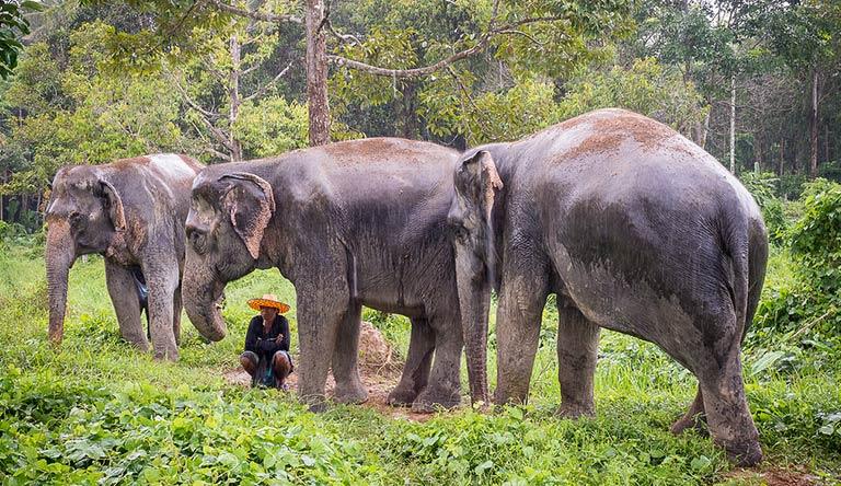 elephant-sanctuary-phuket-thailand.jpg